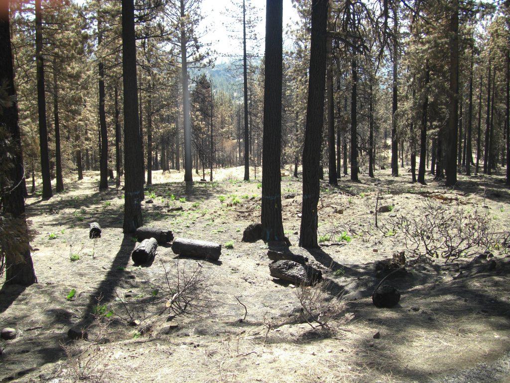 South Lake Tahoe WoodStraw