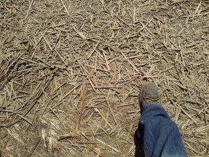 WoodStraw High Coverage Erosion Control