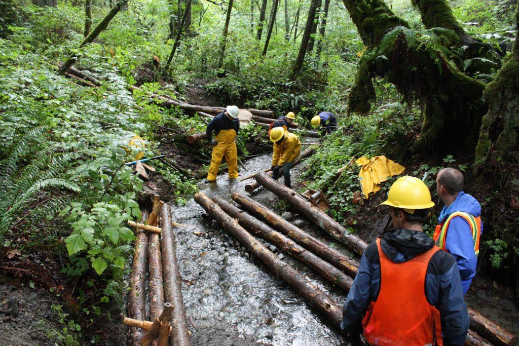 Roundwood Bioengineering Habitats